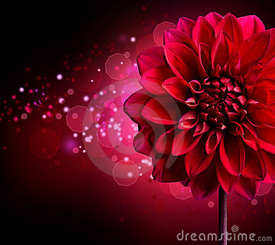 Free Dahlia Flower Design Stock Images - 20592994
