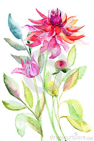 Dahlia flower, watercolor illustration