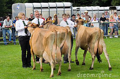 Dairy Cattle Cartmel Show 2011 Editorial Image