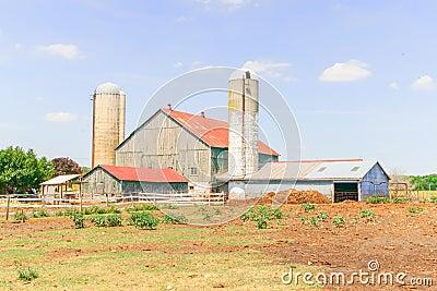 Dairy farm in Ontario, Canada