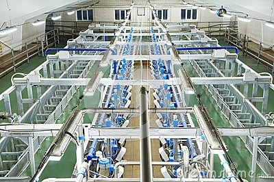 Dairy milking system farm