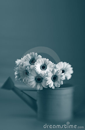 Free Daises In Black And White Stock Photography - 4413772