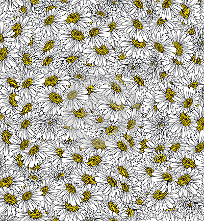 Daisies Background Ink Drawing