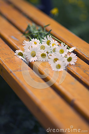 Daisies On a Bench