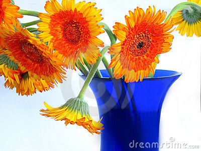 Daisies on blue vase
