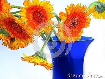 Daisies on blue vase