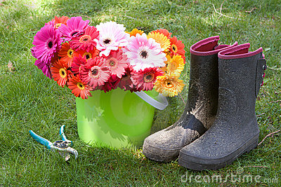Daisies, boots, & secateurs - yard work