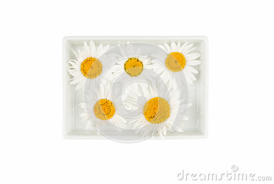Daisies are in the ceramic plate