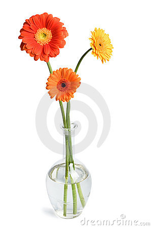 Free Daisies In Vase Stock Photography - 4382332