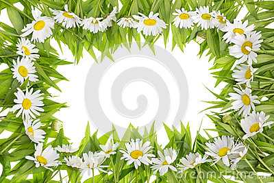 Daisies meadow frame concept