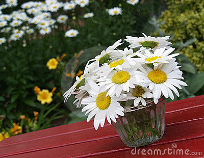 Daisies on picnic table