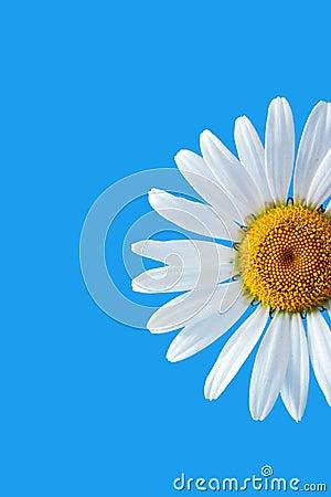 Free Daisy Stock Images - 297504