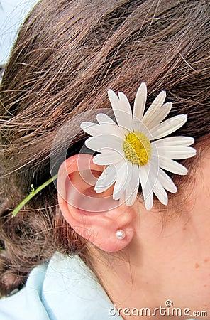 Daisy achter oor