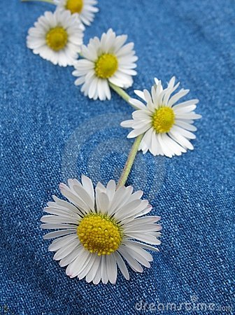 Free Daisy Chain Royalty Free Stock Image - 844356