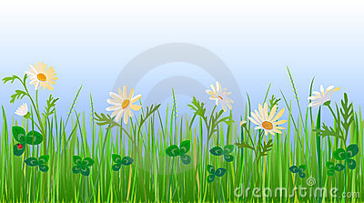 Daisy and Clover Meadow
