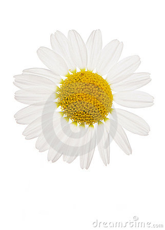 Free Daisy Cutout Royalty Free Stock Images - 14990169