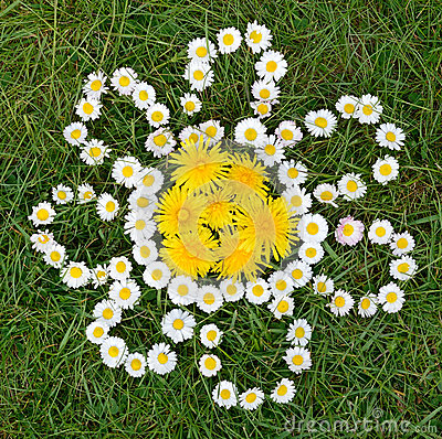 Daisy and dandelion flowers composition
