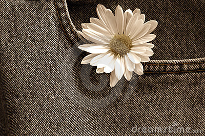 Daisy in denim pocket/ Sepia