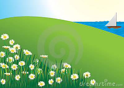 Daisy field - vector