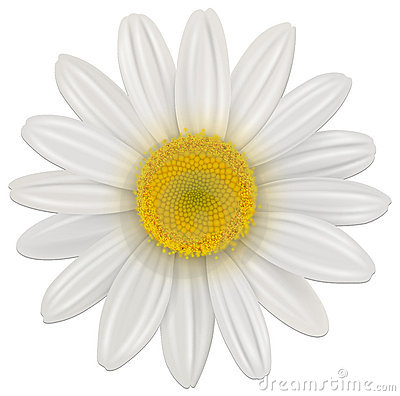 Free Daisy Flower Stock Photography - 22842622