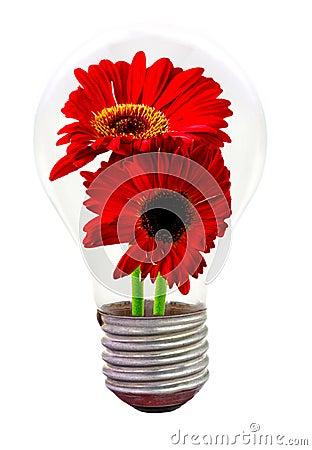 Daisy flower inside the light bulb