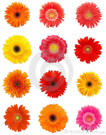 Free Daisy Flowers Royalty Free Stock Images - 2417159