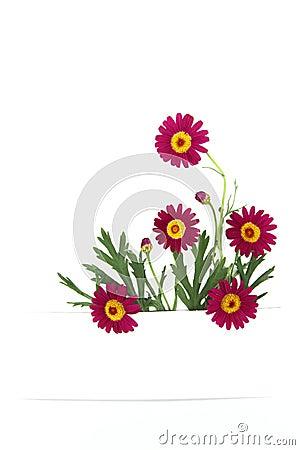 Daisy flowers banner