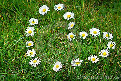 Daisy flowers formed heart shape