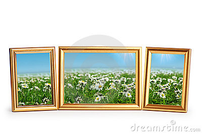 Daisy flowers in the  frames on white