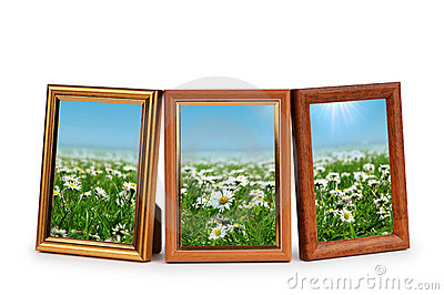 Daisy flowers in the picture frames