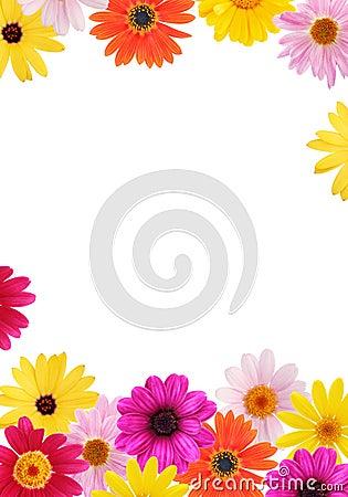 Free Daisy Frame Stock Image - 2306171