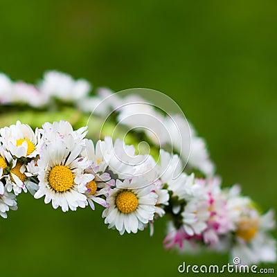 Daisy garland