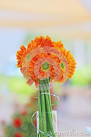Daisy Gerbera Flower