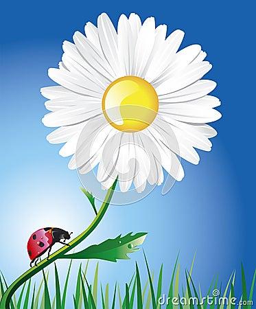 A daisy and a ladybug