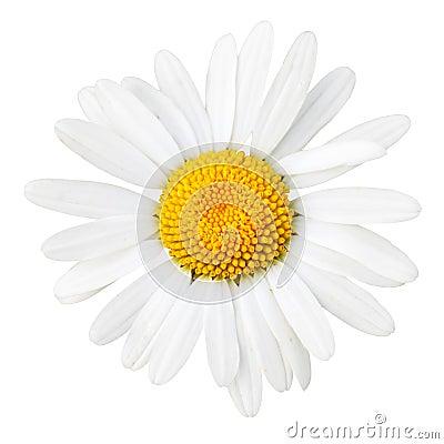 Free Daisy Macro Royalty Free Stock Photo - 4978965