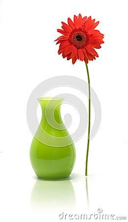 Daisy beside vase