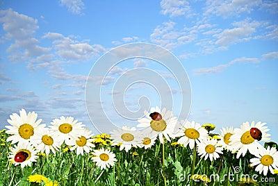 Daisywheels
