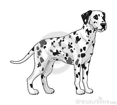 Free Dalmatian. Royalty Free Stock Photos - 34596088