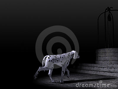 Dalmatian Dog in the night