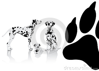 Dalmatian dogs background