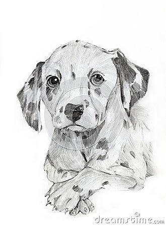 Dalmatian drawing portrait