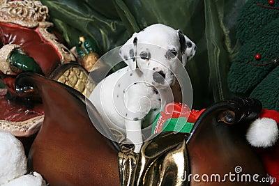 Dalmatian Puppy In Santa s Sleigh 2