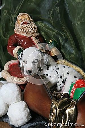 Dalmatian Puppy In Santa s Sleigh 3