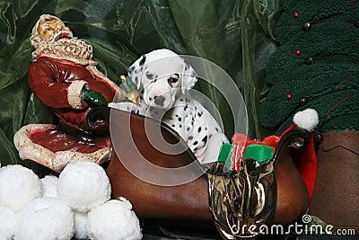 Dalmatian Puppy In Santa s Sleigh 4