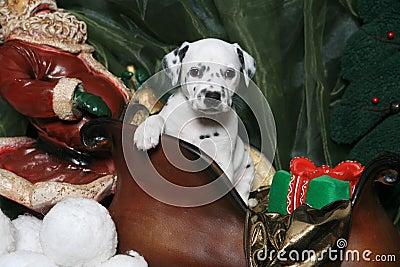 Dalmatian Puppy In Santa s Sleigh 5