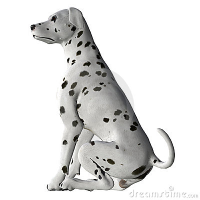 Free Dalmation - 01 Royalty Free Stock Images - 1999929