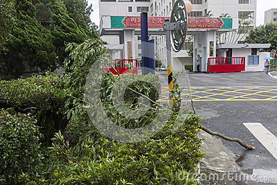 Damage done by the Typhoon Soulik to the Taipei city Editorial Image