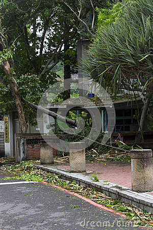 Damage done by the Typhoon Soulik to the Taipei city Editorial Photography