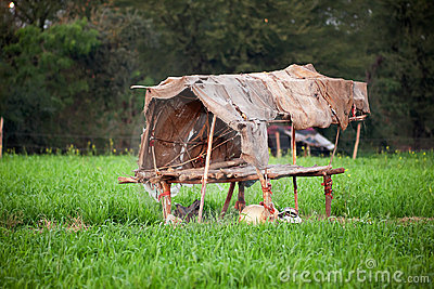 Damaged old hut