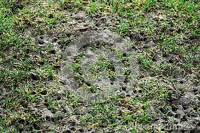 Damaged pitch